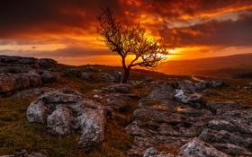 Картинка закат, камни, небо, деревья, дорога, зарево, горы