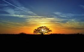 Картинка солнце, закат, дерево, вечер, силуэты