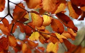 Картинка листья, оранжевый, scotto (devart), ветки, жёлтый