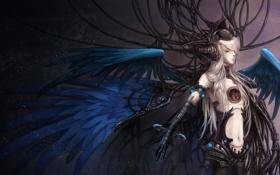 Обои провода, крылья, перья, парень, sherytan