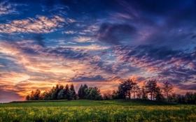 Картинка поле, деревья, пейзаж, закат, цветы, природа, trees