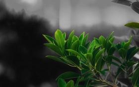 Картинка green, leaves, macro, Partial Color, photograyhy