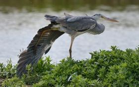 Картинка природа, птица, лапа, клюв, крыло