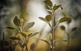 Обои зелень, листья, макро, ветки, природа, лист, блики