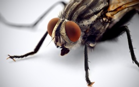 Обои legs, eyes, fly, Insect, compound eye, mouthparts