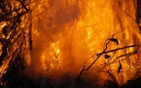 Обои огонь, фон, горение