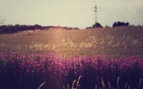 Картинка поле, небо, цветы