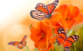 Обои цветы, природа, коллаж, бабочка