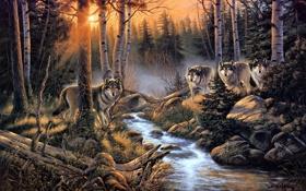 Обои лес, природа, ручей, стая, арт, волки