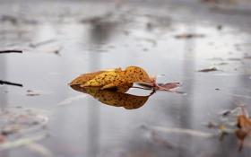 Картинка осень, вода, желтый, лист, лужа