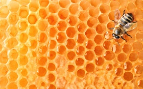 Картинка пчела, соты, мед