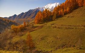 Картинка осень, снег, деревья, горы, склон