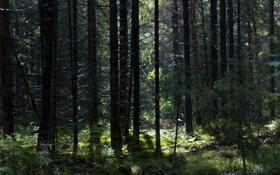Картинка лес, свет, мох, пень