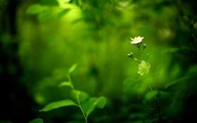 Обои травка, цветок, листья, природа