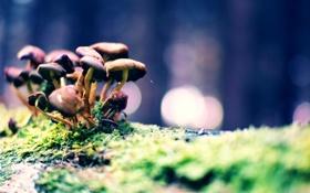 Картинка трава, макро, грибы, мох