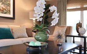 Картинка цветок, комната, белая, цветение, орхидея