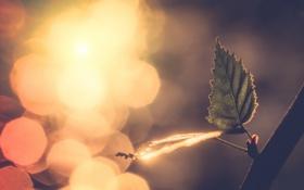 Картинка природа, лист, ветка