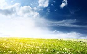 Картинка поле, небо, облака, свет, простор, белые, одуванчики