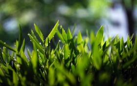 Обои зелень, трава, grass