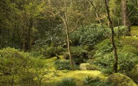 Картинка США, камни, ручей, зелень, Portland, Oregon, кусты