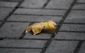 Обои осень, лист, тротуар