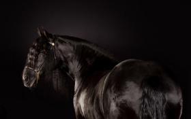 Обои фон, конь, цвет