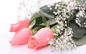Обои листья, розы, цветы