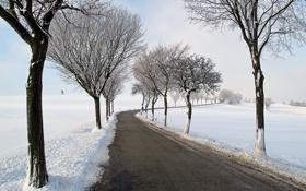 Картинка зима, дорога, деревья