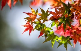 Обои осень, листья, зеленые листья, стебли, autumn, leaves, красные листья
