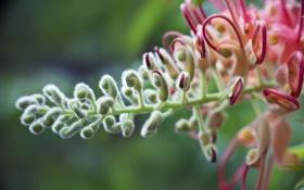Картинка макро, природа, растение, macro