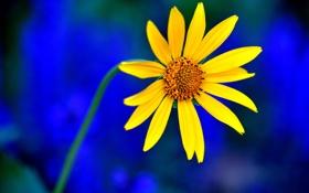 Обои стебель, цветок, растение, лепестки, природа