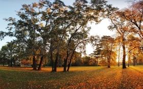 Картинка листья, осень, закат, деревья, желтые, парк, листва