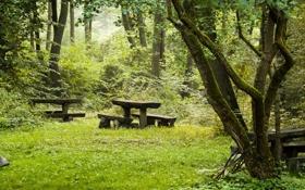 Картинка фото, Природа, Трава, Скамейка, Лес