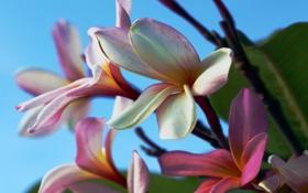 Обои #природа, #цветы, #растение