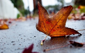 Обои грусть, осень, лист, одинокий