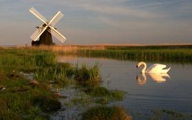 Картинка небо, птица, канал, лебедь, ветряная мельница