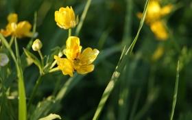 Обои зелень, лето, трава, солнце, цветы, жара, желтые