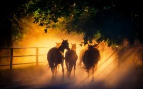 Обои свет, кони, лошади, табун, солнечный