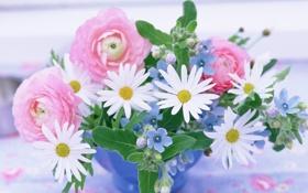 Картинка букет, ромашки, цветы
