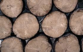 Обои дерево, текстура, кольца, брёвна