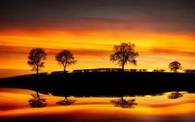 Обои деревья, пейзаж, закат, Reflections