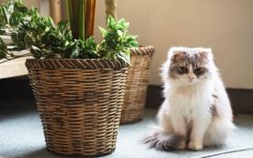 Обои кошка, цветок, кот, растение, пушистый, кашпо