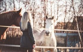 Картинка животные, девушка, лошади