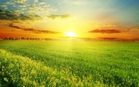 Картинка поле, деревья, закат, природа, grass, травка, trees