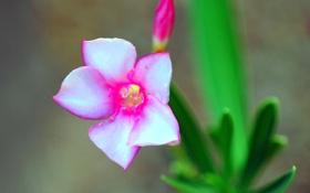 Обои листья, цветок, экзотика, лепестки, растение
