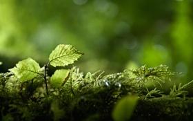 Обои зелень, лес, ветки, природа, листва