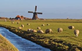 Картинка поле, небо, дом, овцы, канал, ветряная мельница