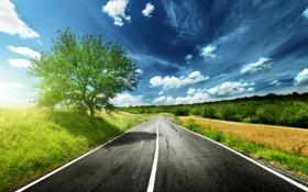 Картинка дорога, поле, небо, трава, асфальт, деревья, цветы