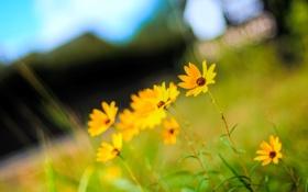 Картинка лето, цвета, цветы, природа, яркие, растения