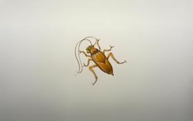 Картинка улыбка, жук, минимализм, таракан, cockroach, насекомое, усатый